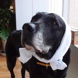 看板犬のブルーノ