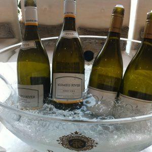 冷え冷えのクメウリヴァーの白ワインたち最高っ(*'▽')今日はピノグリをおすすめ