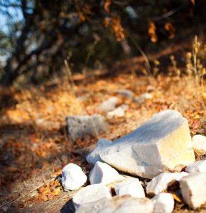 カリフォルニアワイン カレラ CALERA 石灰岩