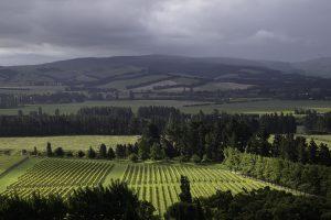 ニュージーランドワイン マウントフォード エステート 自社畑
