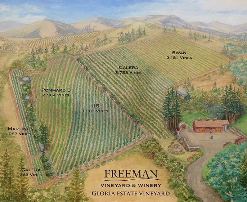 カリフォルニアワイン ソノマワイン フリーマン グロリア ヴィンヤード