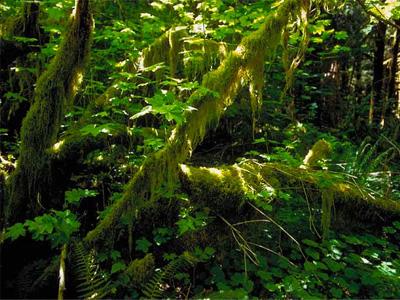 温帯雨林7